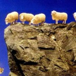 sheep-fall-off-fiscal-cliff-620x409
