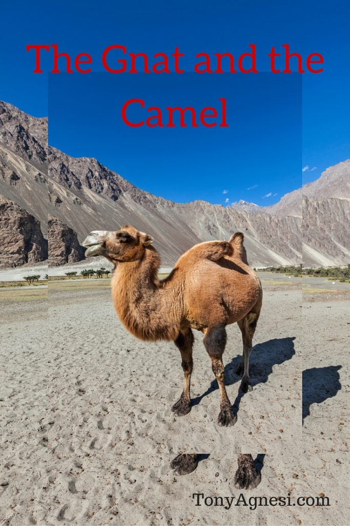 The Gnat and the Camel